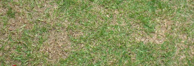 Brown patches in Grass